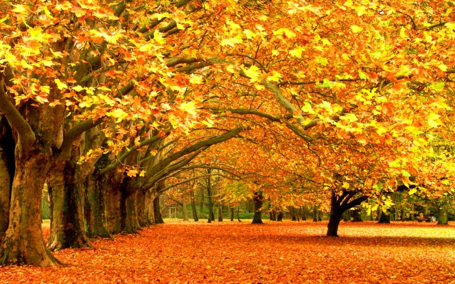 autumn-trees-background-wallpaper-1