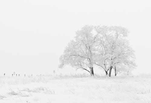 winter-nature-season-trees-66284