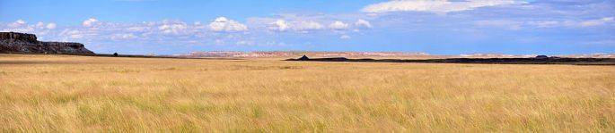 1000px-Shortgrass_pano_Petrified_Forest_NP