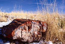 220px-Fossilized_wood_at_Petrified_Forest