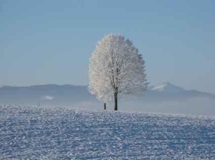 winter-snow-white-cold-65245
